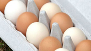 Refrigerated Products & Eggs